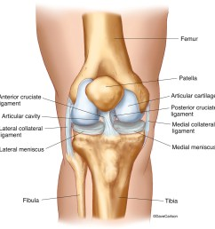 knee joint front view 2 carlson stock art diagram of front of knee [ 1159 x 1200 Pixel ]