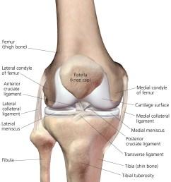 illustration bones ligaments cartilage menisci right knee front view  [ 1015 x 1200 Pixel ]