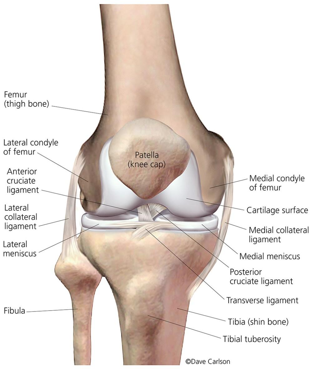 medium resolution of illustration bones ligaments cartilage menisci right knee front view