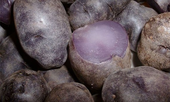 Purple Potato from Peru