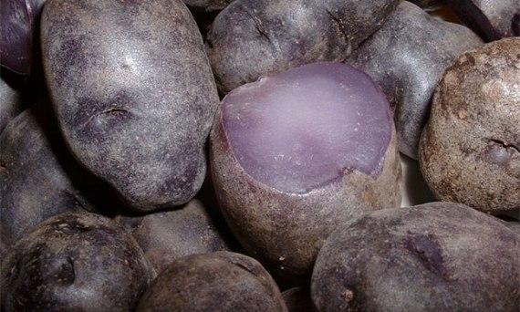 Purple Potato from Peru