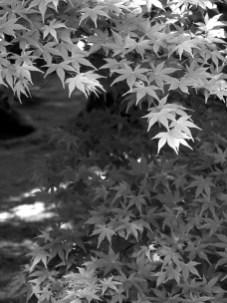 Kimberli Phillips, Spring Leaves