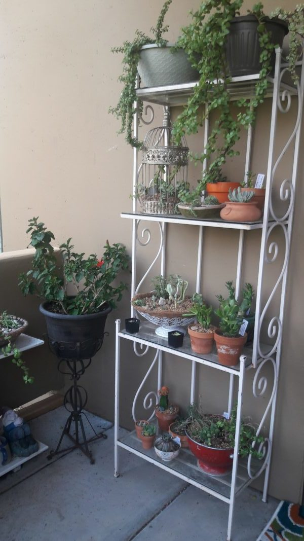 Balcony gardening with succulents and perennials