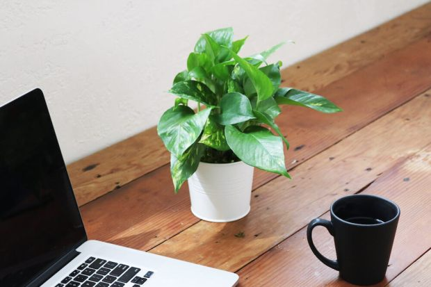 5 Easiest House Plants by Carmen Whitehead Designs