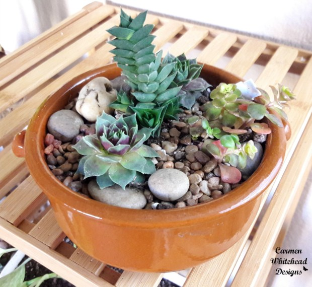 Creating a succulent arrangement with Mountain Crest Gardens succulents by Carmen Whitehead Designs