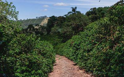 Fazenda Santuário Sul