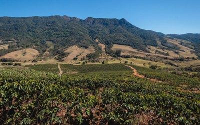Fazenda São Pedro (Araras)
