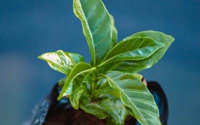 Planting, Shipping, Cria Carmo #2