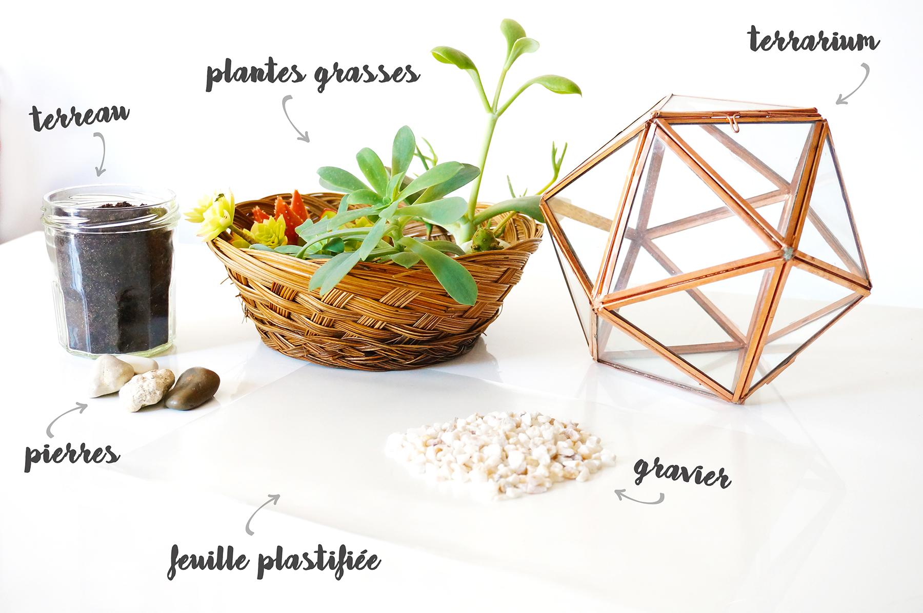 Terrarium Fermé Plante Grasse diy : le terrarium du professeur chourave – carnet lunaire