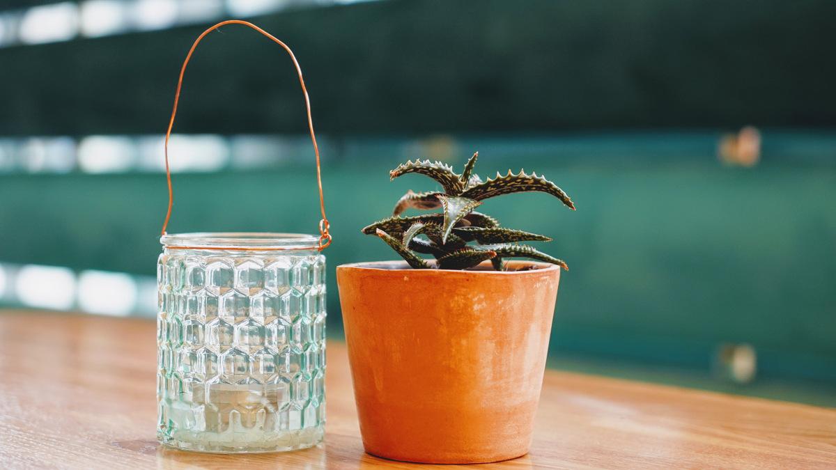 cactus et lampion piada confluences lyon