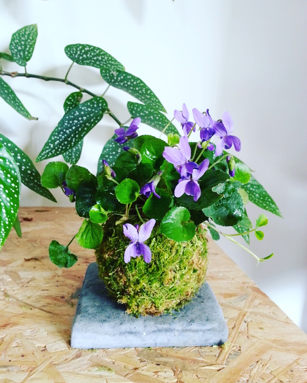 kokedama avec des fleurs