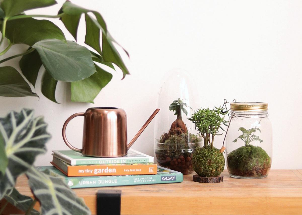 atelier kokedama rencontre avec cathy carnet lyonnais. Black Bedroom Furniture Sets. Home Design Ideas