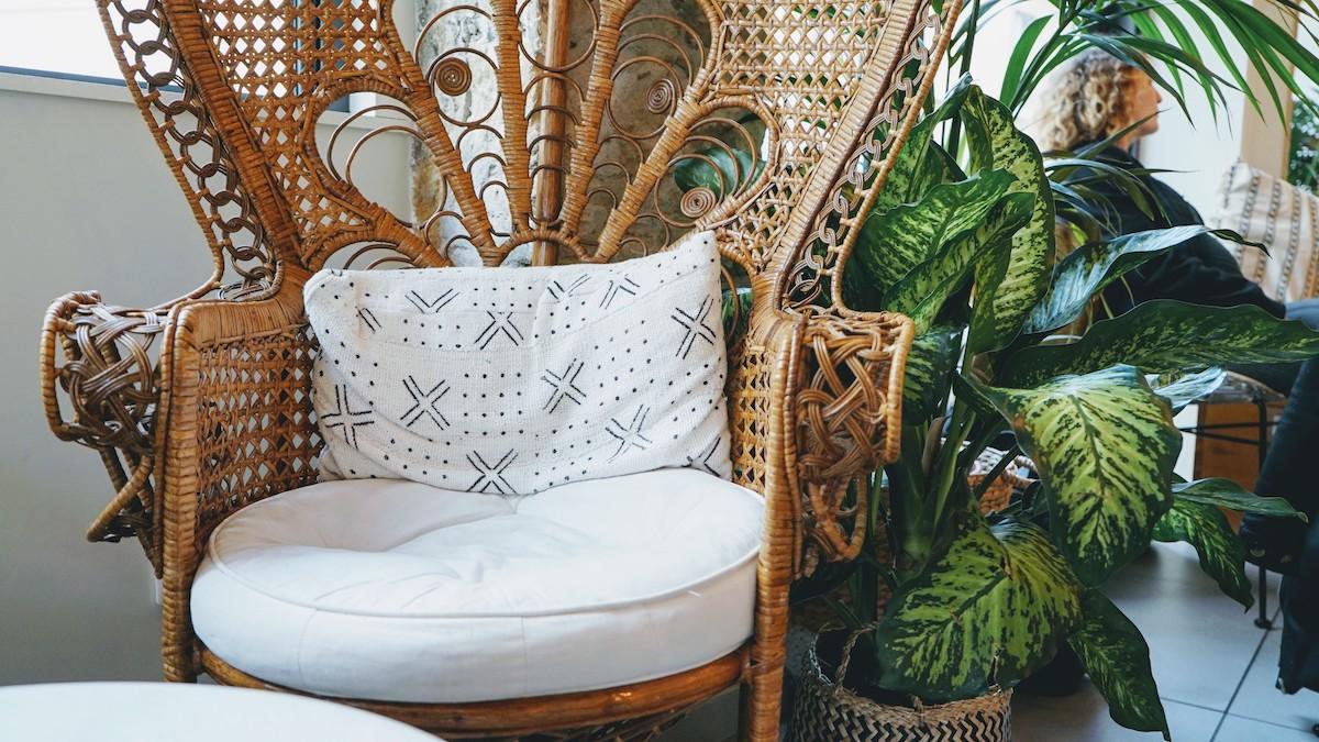 fauteuil emmanuelle et plante verte