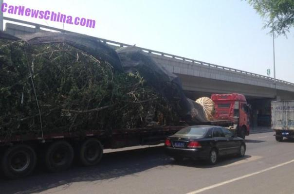 truck-tree-china-bj-3