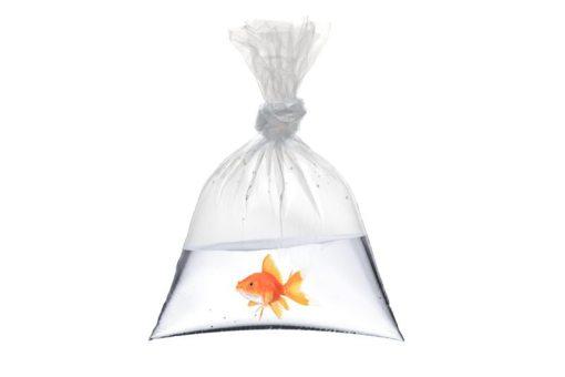 Plastic Fish Bags carnival supplies