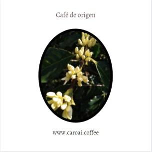 Flores de café del cultivo de Caroai Café. Café de origen