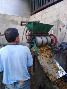 El productor de café es la base de la cadena de valor.