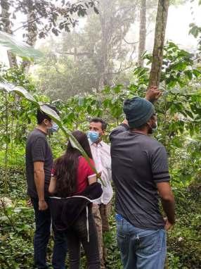 En el cultivo viviendo una experiencia de turismo y café.