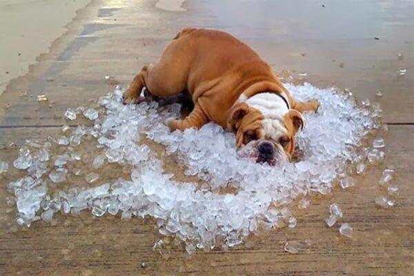 hipertermia-no-cachorro
