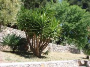palm_shrubs