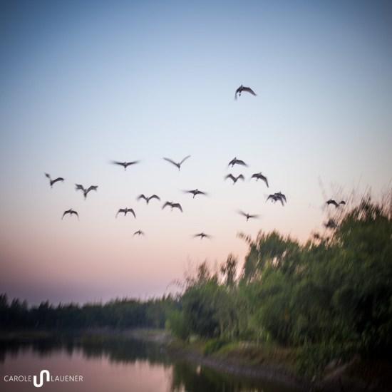 10_river