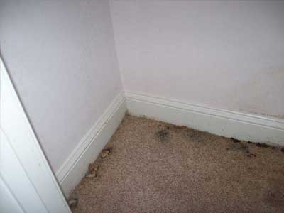 Mold Growth in your home   Greenville SC   Anderson SC  Spartanburg SC  Greer SC