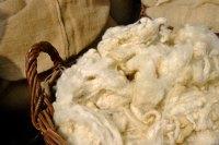 Sheep to Shawl Contest | Carolina FiberFest