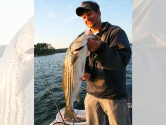 Murray stripers
