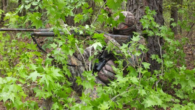 To build a blind, use vegetation that's native to the area you're hunting so turkeys won't suspect a trap.