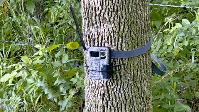 Cellular trail cameras are affordable and convenient - Carolina ...