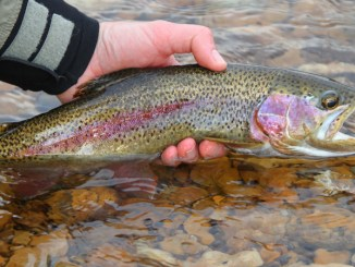 hatchery supported trout waters