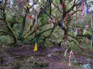 Cloutie-Tree-geograph-230753-by-Jim-Champion-300x225 Author's Blog Guest Author