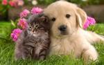 L'âge des chiens et chats par rapport à nous, les humains