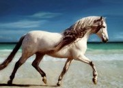 Le cheval (équidé) et le scrabble (77 tirages)