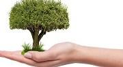 Les arbres , les arbustes et le scrabble 2/10