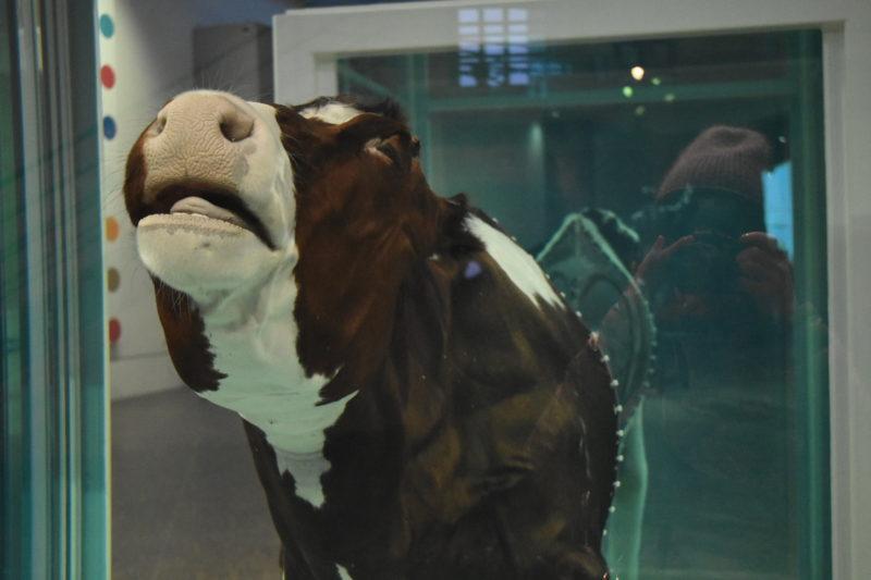 Damien Hirst Cow in Formaldehyde