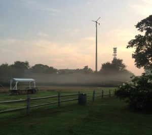 early morning at the farm