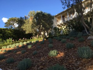 drought tolerant plants and landscaping