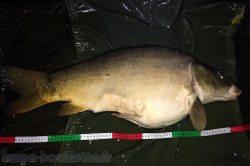 Carpe de 12.5 kg (Fades-Besserve)
