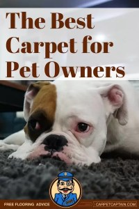 Best Carpet for Pet Owners