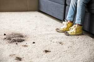 Carpet Cleaning Collingwood Park Service