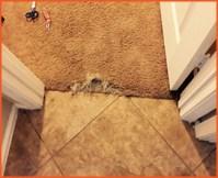 Carpet Repairs Christchurch | Carpet Patching | t. 03 741 4465