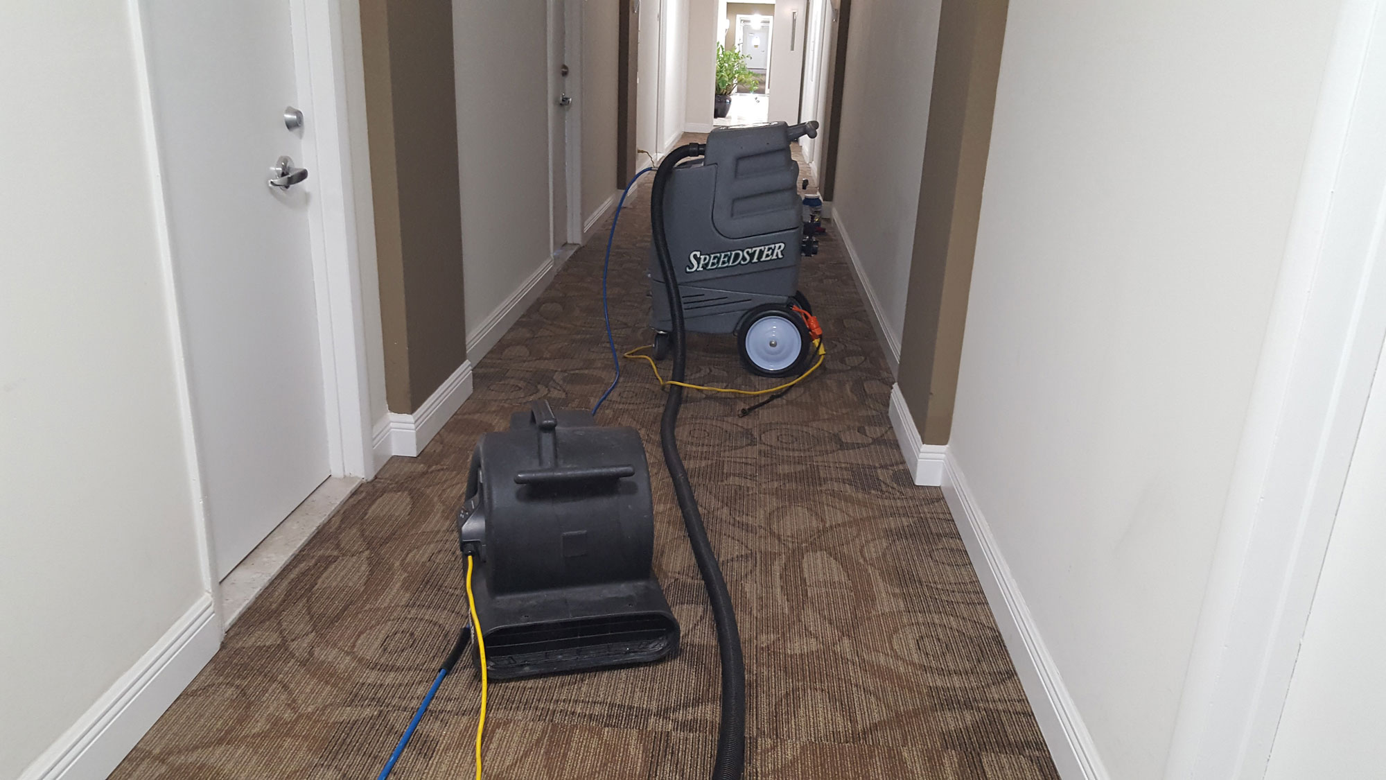 Carpet Cleaning Naples Fl Rugs Upholstery Cleaners In