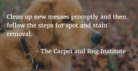 What is the Best Carpet Fiber for Pets? - The Carpet Guys