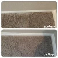 Cat scratching carpet | Carpet Repair Houston | Carpet ...
