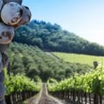 Alla scoperta dei vitigni: il Cabernet Franc