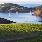 Languedoc-Roussillon: terra dalla enorme potenzialità viticola.