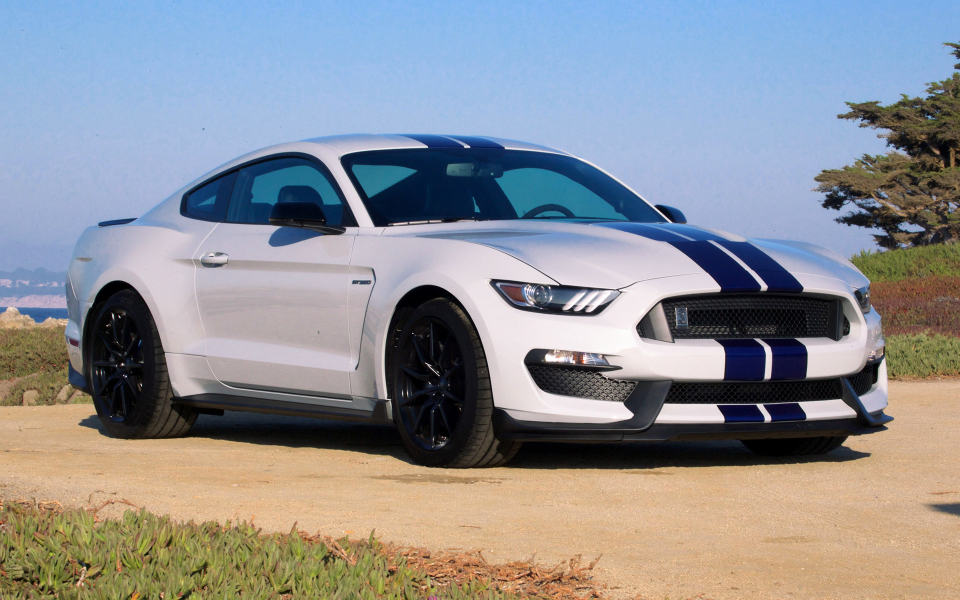 Hd Car Wallpapers Subaru 2016 Shelby Gt350 Mustang Wallpapers And Hd Images Car