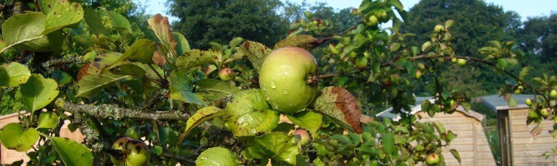Carrbank Garden Centre Apple Tree