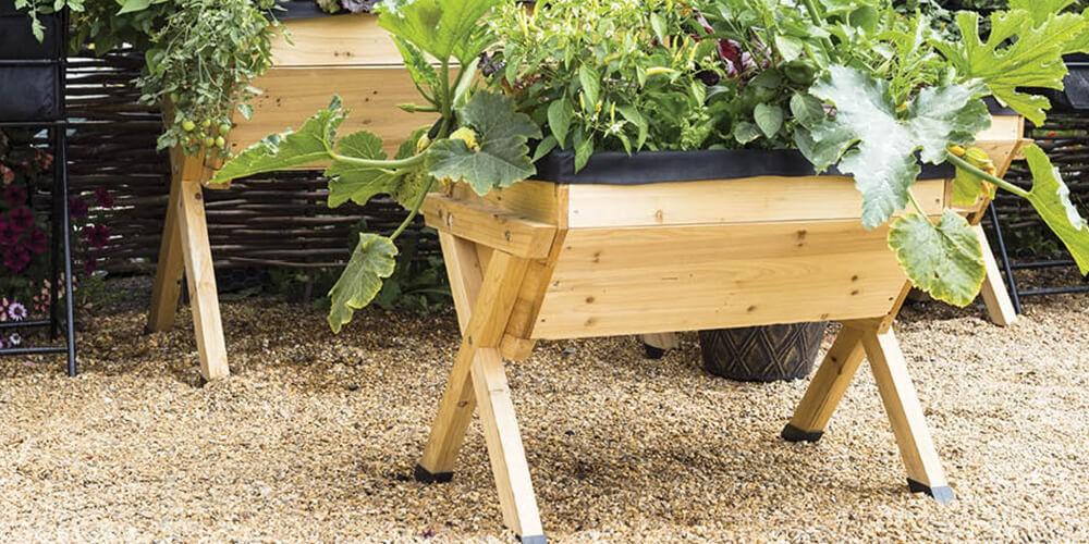 demarrer un jardin potager ce n est pas
